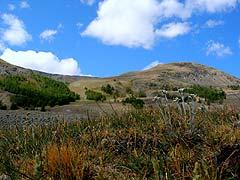 Конный поход на плато Укок : Эдельвейсы