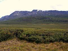 Конный поход на плато Укок : В долине реки Мукыр