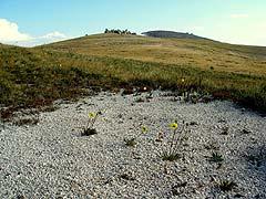 Конный поход на плато Укок : Мраморная кроша, шуршащая под ногами
