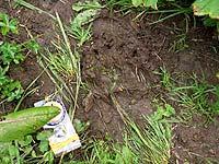 Горный Алтай : Поход от Чемала до Телецкого (лето 2007) : След медведя