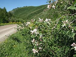 Горный Алтай : Велопоход «Два Алтая» : Алтайский край в цвету