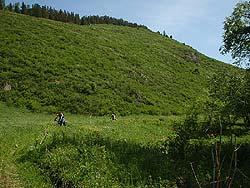 Горный Алтай : Велопоход «Два Алтая» : Заросшая дорога
