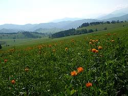 Горный Алтай : Велопоход «Два Алтая» : Красота кругом