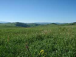 Горный Алтай : Велопоход «Два Алтая» : Сочная трава, где прячутся птичьи гнезда