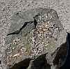 Горный Алтай : Семинский перевал : Камень с монетками